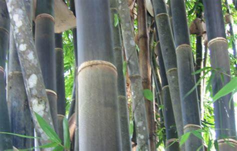 different types of bamboo thai garden design