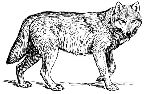 Wolf Coloring Pages 2 Coloring Pages To Print Wolf Coloring Pages Free