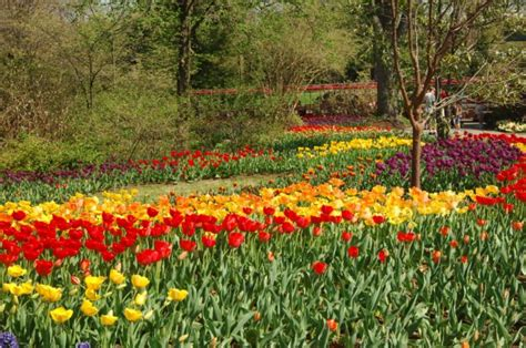 Tulip Mania Has Struck At The Cincinnati Zoo The Botanical Garden Cincinnati