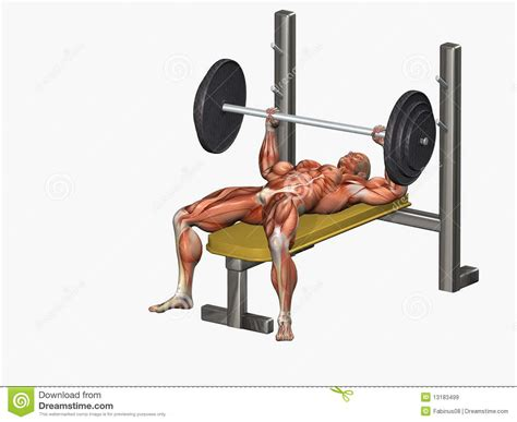 bench press picture royalty free stock images bench press image 13183499