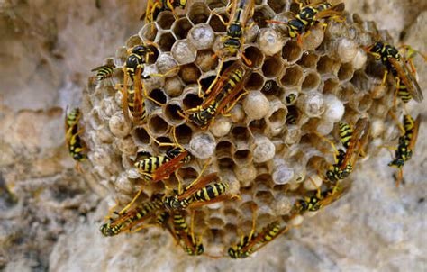 Bienen Rolladenkasten Vertreiben by Wespennest Im Haus Wespennest Im Rolladenkasten