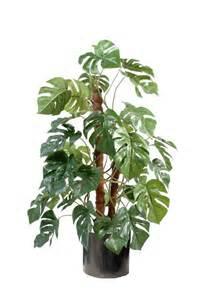 plante int 233 rieur notre s 233 lection de plantes