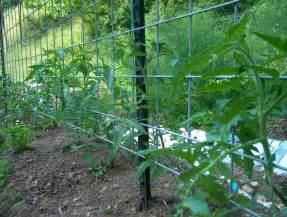 Wire Trellis Panels Palazzo Rospo Sturdy Garden Trellis