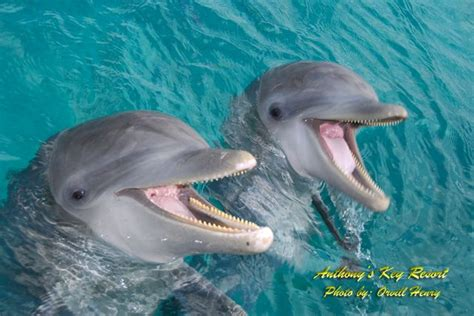 dolphin talk how we can talk with dolphins in 5 easy steps age books dolphin therapy internships