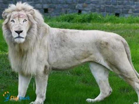 imagenes de animales raros del mundo los animales mas curiosos del mundo youtube