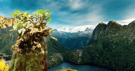 Bakalan Bonsai Murah harga berbagai jenis bakalan tanaman bonsai