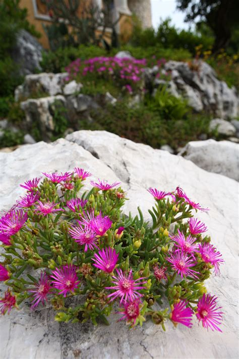 giardini rocciosi giardini rocciosi il giardino di de pra snc