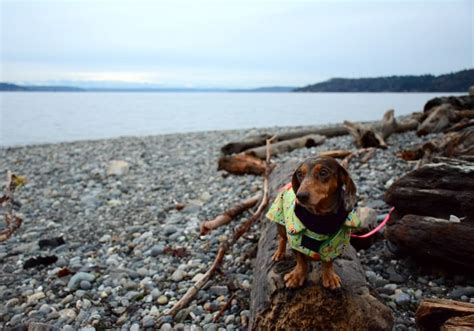7 Reasons I Look Forward To Fall 7 reasons i look forward to fall with my dogs