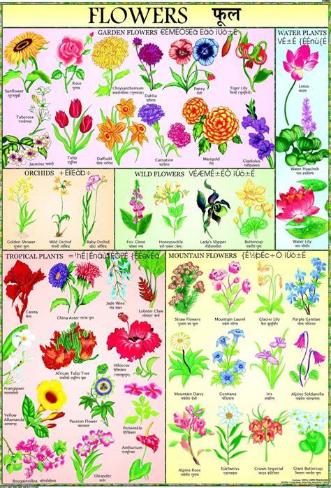 Home Decor Flipkart by Flowers Chart For Children Paper Print Children Posters