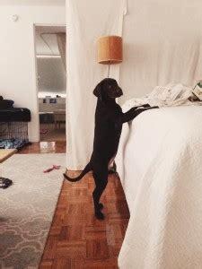 manhattan puppies and kittens reviews 2015 manhattan puppies kittens