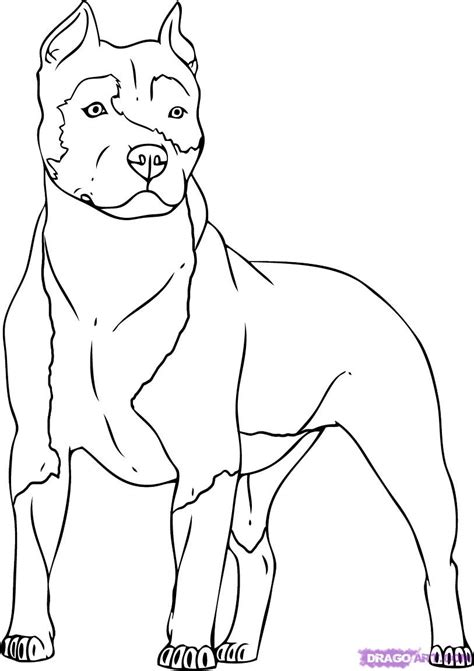 how to a pitbull how to draw a pitbull step by step pets animals free drawing tutorial