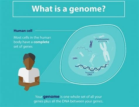What Is A by Genomics 100 000 Genomes Project