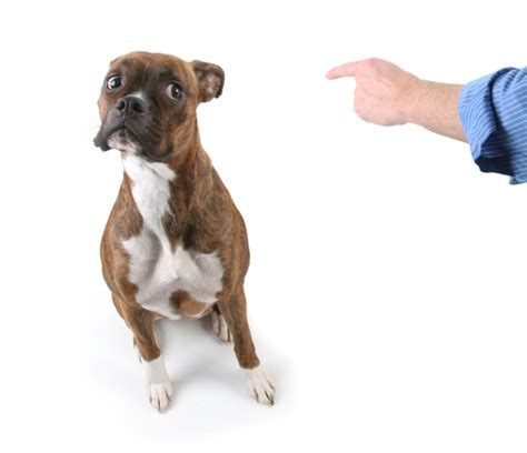 medication for aggressive dogs should you put your anxious aggressive on medication iheartdogs