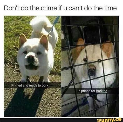 Gay Dog Meme - pin by max pavlova on jokes on you pinterest animal