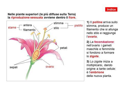 il fiore e la riproduzione 1 il mondo vegetale 2 come si nutrono le piante 3 la