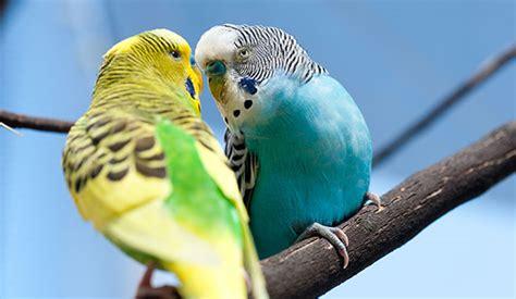 alimentazione uccelli alimentazione e accessori per uccelli centerzoo lariano