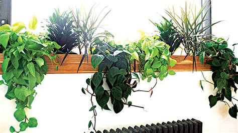 indoor plant dying why your houseplants keep dying saturday magazine the