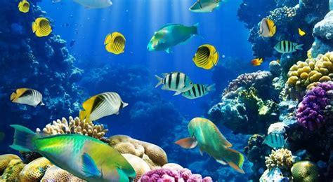 gambar wallpaper alam bawah laut gambar pemandangan di dasar laut yang indah kumpulan