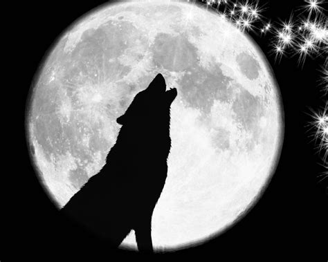 wolf howling at moon tattoo coyote howling at the moon tattoos