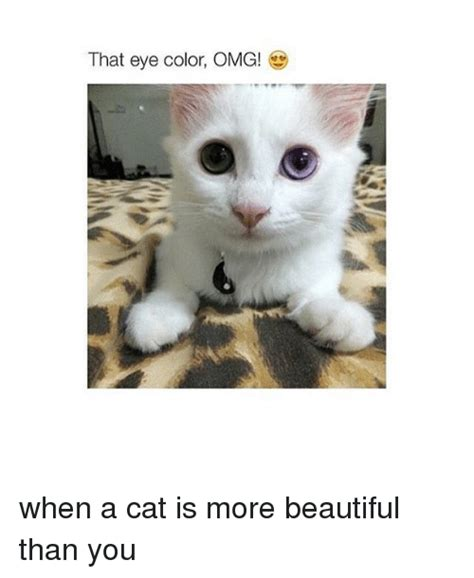 Omg Cat Meme - funny cats and omg memes of 2017 on sizzle