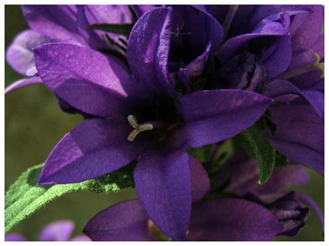 Europa Next Violet by Treknature Violet Flower Photo