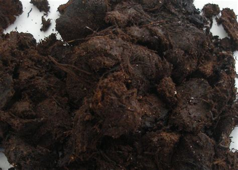Faktor Yang Mempengaruhi Minyak Kelapa Sawit baja organik