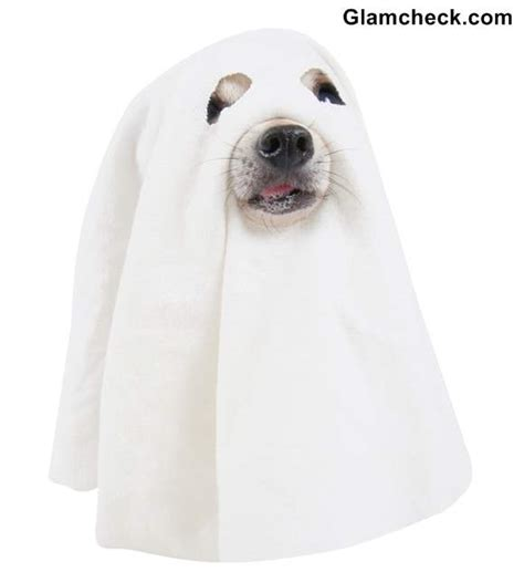 ghost costume for dogs diy ghost costume for your