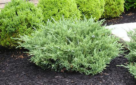 shrub plants lehigh acres