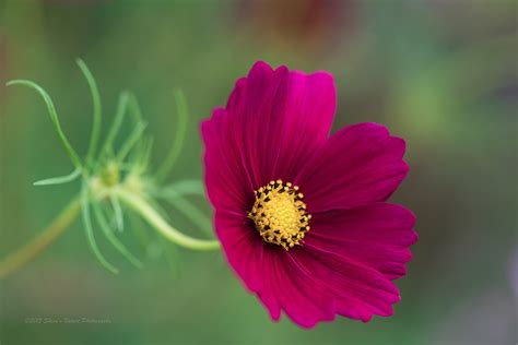 flower photography what lens should you use for flower photography the