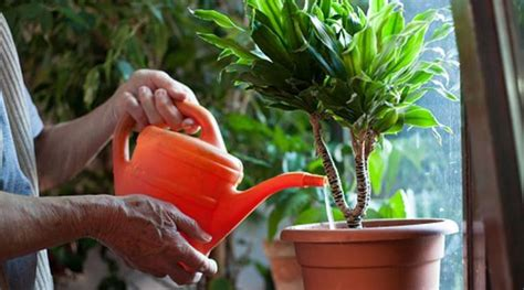 world environment day plants  beat indoor air pollution