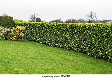 clipped garden hedge stock photos clipped garden hedge stock images alamy