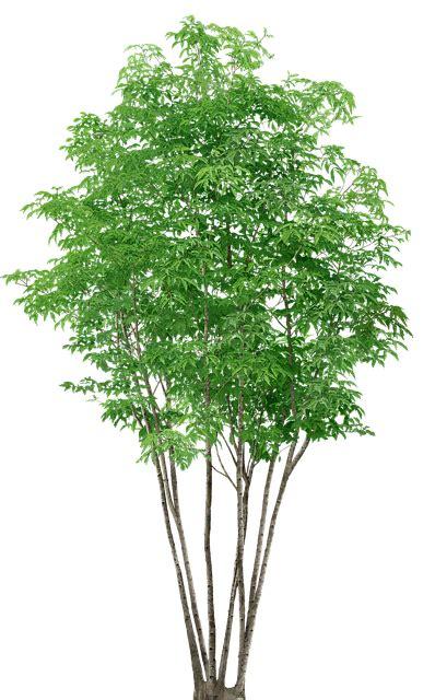 trees   photo  pixabay
