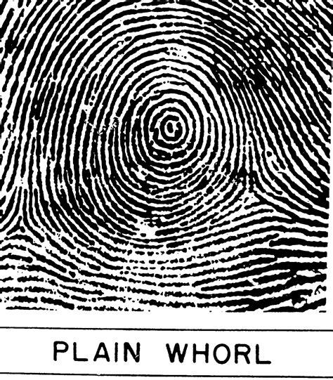 print pattern types fingerprints unique to us all jennifer lipton