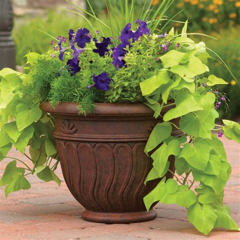 tips walmart planters  modern potted plants ideas
