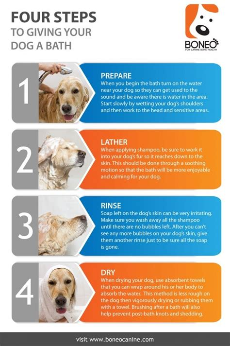 how to give puppy a bath pin by boneo 174 for canine bone and joint health on infographics