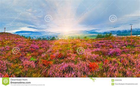 erica fiori colline pedemontana paese di alba di settembre con i