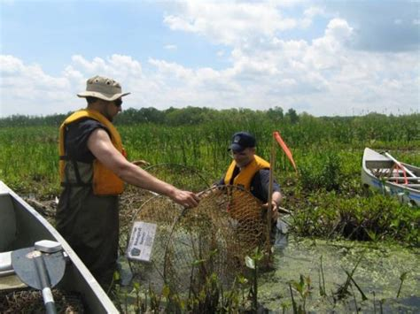 pa fish and boat species blanding s turtles threatened in pa not yet endangered