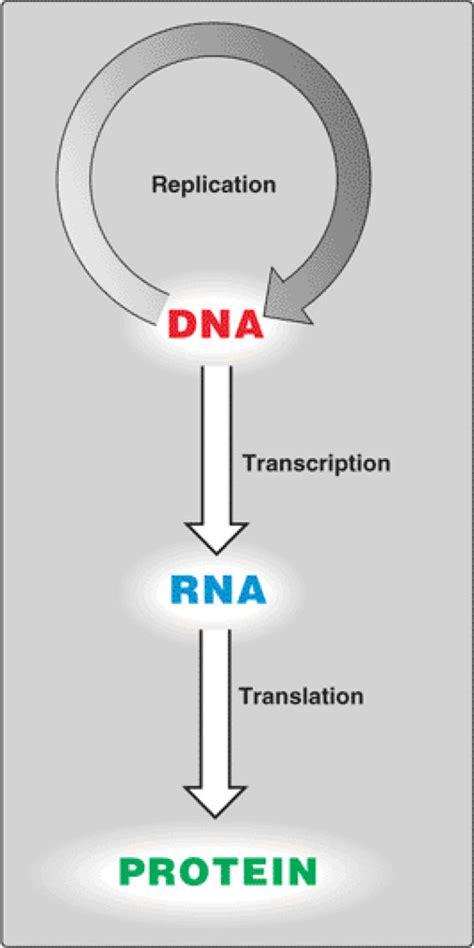 molecular biology central dogma medicine hack