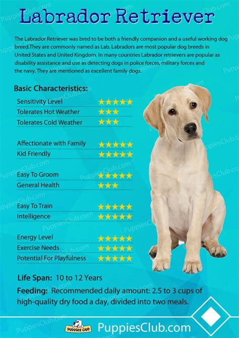 types of dogs and their personalities labrador retriever dogs breed information personality