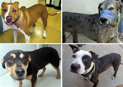 worst dogs for worst dogs for breeds that shouldn t be around a family with