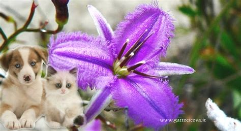 fiori australiani emergency fiori australiani