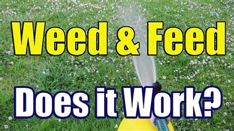 how to apply liquid weed n feed the results of weed and