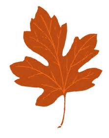 leaf clipart winter leaves pencil and in color leaf