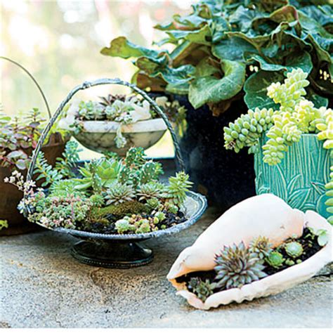 Succulent Planters Ideas by Garden Diy Succulent Gift Ideas