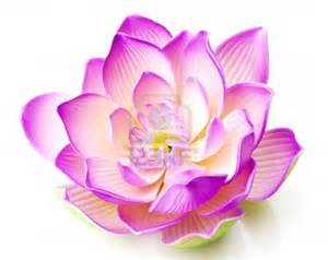 Meaning Of The Lotus Flower In Hinduism 8351046 Fleur De Lotus Arura