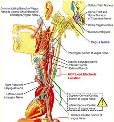 diagram of the vagus nerve the brain vagal nerve cleveland clinic