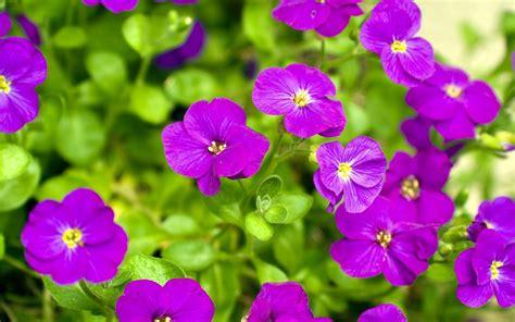 wallpaper nature flower pictures best wallpaper hd 1080p free download 1366 215 768 flower