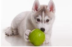 vegetables ok for dogs healthy fruits and veggies for pets trupanion