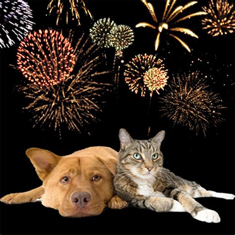 dogs and fireworks happy new year scary fireworks vet n pet direct