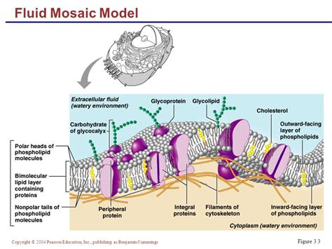Mozaik Model cells the living units part a ppt